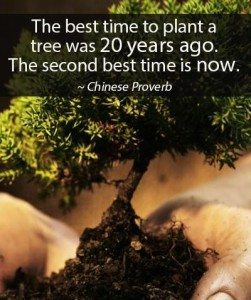 time-to-plant